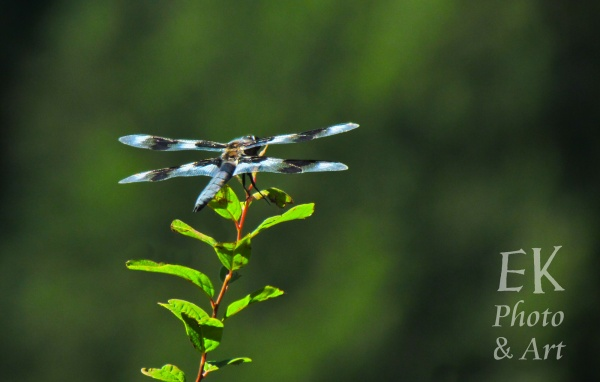 Dragonfly 3 - Nature Photography